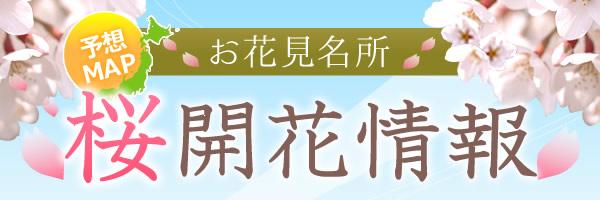 お花見名所の桜開花情報2021